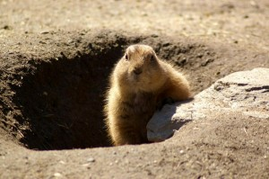 Groundhogs repeat their shadow finding