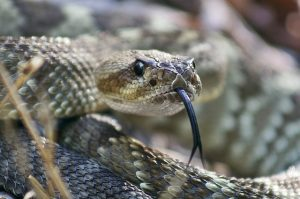 A snake bit the apostle Paul, and he wasn't harmed just as Jesus said would happen because of Jesus' authority..