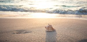 Picture of a beach with a seashell: We know the two kingdoms of Israel have not yet been reunited because the descendants of Abraham are not yet the multitude of the world.