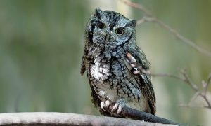 Lilith is depicted as a screech owl in the more traditional Bible translations.